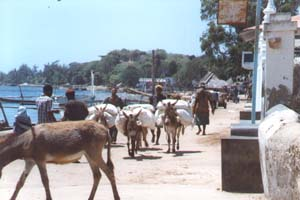 Freight Transport in Lamu Town